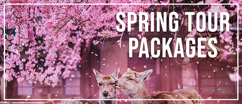 HIS Spring 2020 Japan Tour Packages