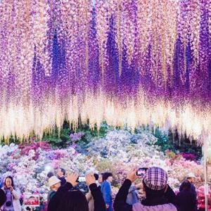 Floral Kanto (Purple Fuji & Shibazakura) Japan