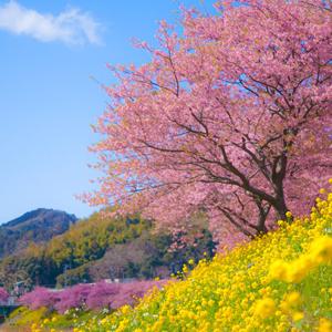 5D4N Tokyo Spring Flower Japan