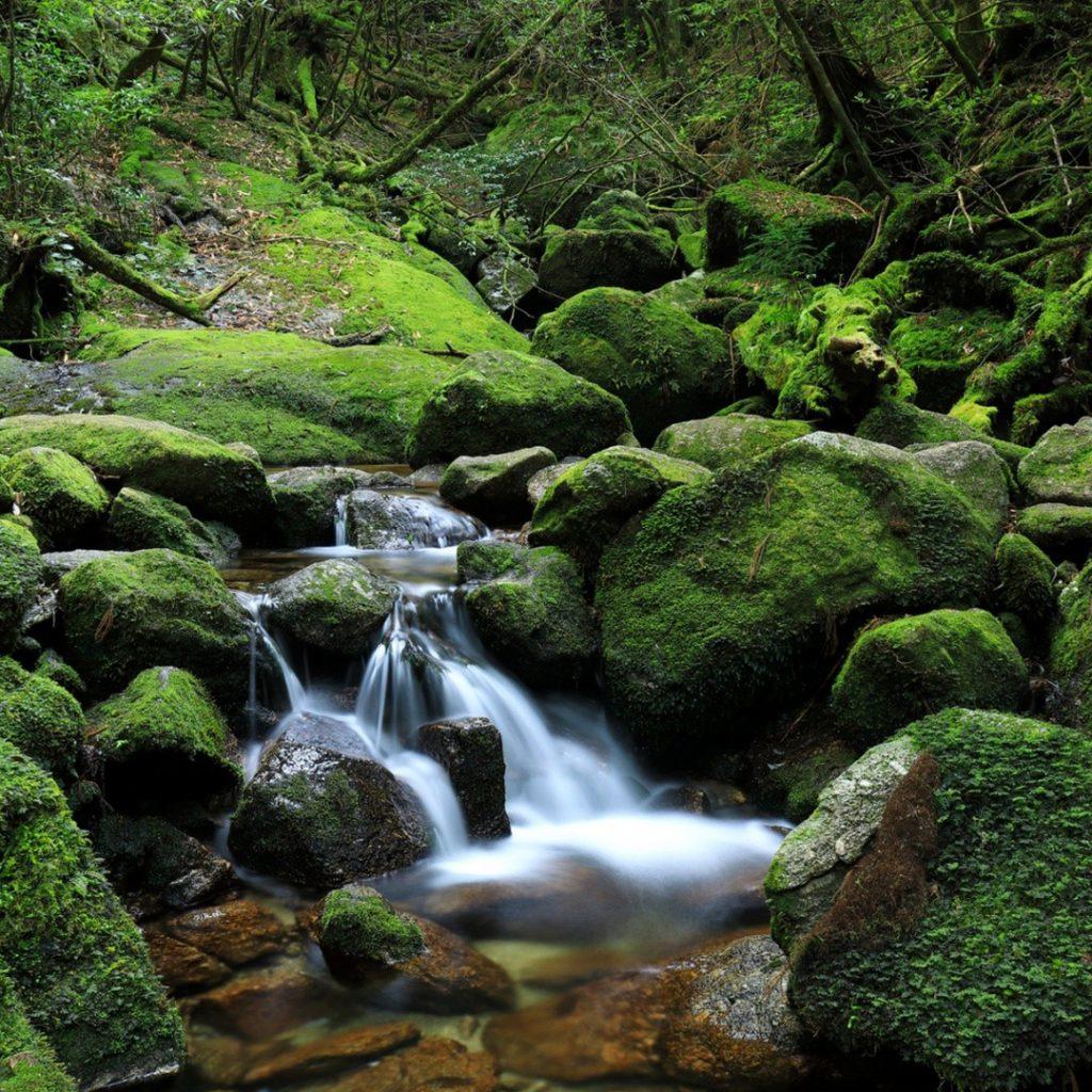 Yakushima Forest Kyushu Japan