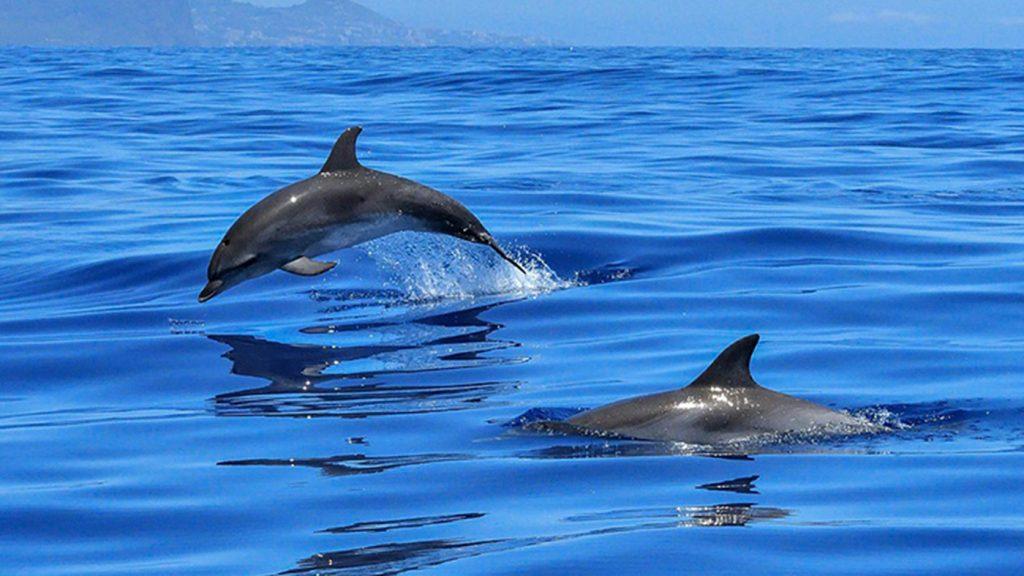 dolphin watching kyushu
