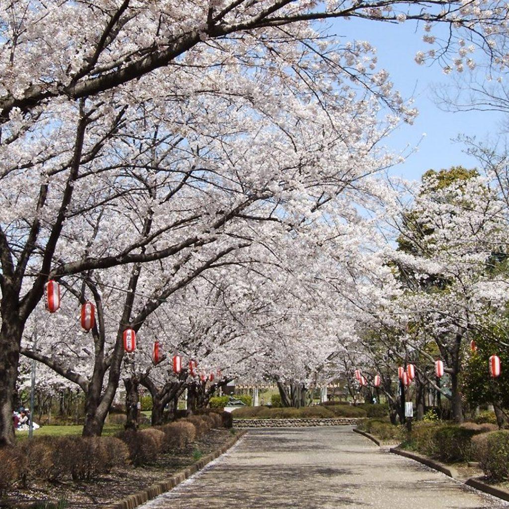 Shiroyama Park Kyushu Kagoshima Japan