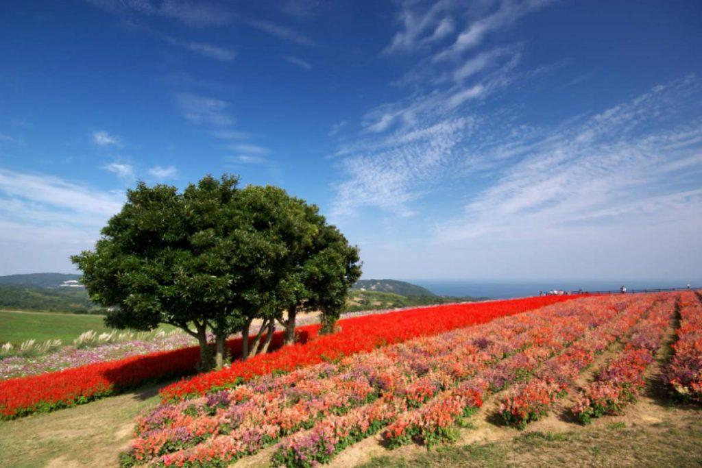 Awaji Hanasajiki Hyogo Kansai Japan HIS Travel