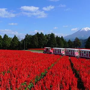 HIS Travel Japan Tottori Hanakairo Flower Park