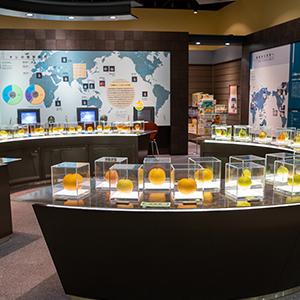 HIS Travel Tottori Japan Pear Museum