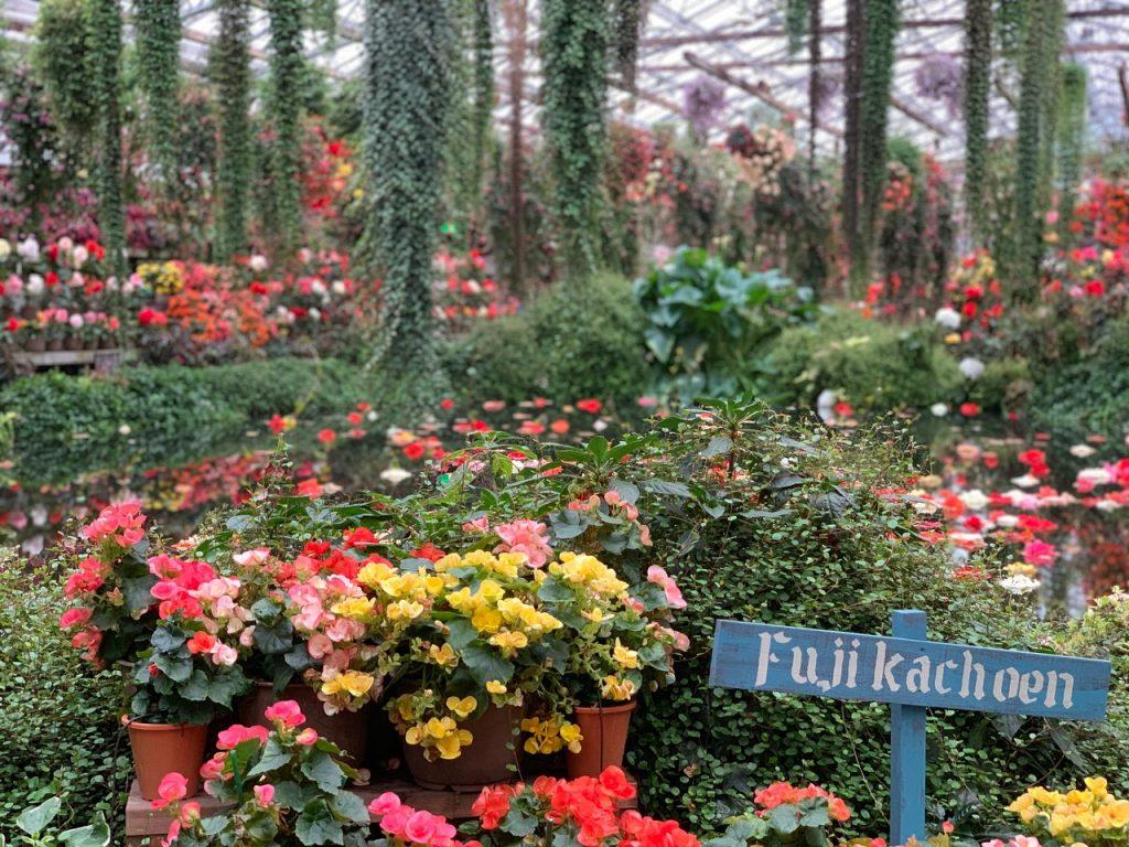 Fujinomiya Shizuoka Fuji Kachoen Garden Park