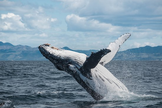 HIS Travel New Zealand South Island Kaikoura whale watching cruise