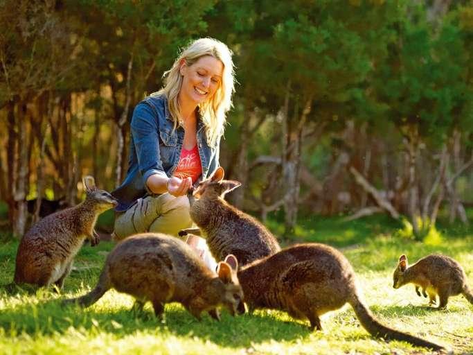 Victoria Australia Moonlit Sanctuary Wildlife Conservation Park