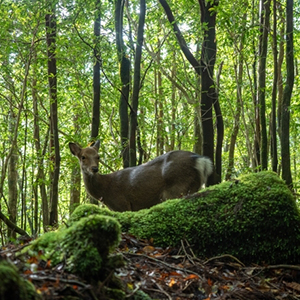 Virtual Tour Japan Kagoshima Yakushima